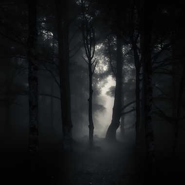 Shadows par Anonymous