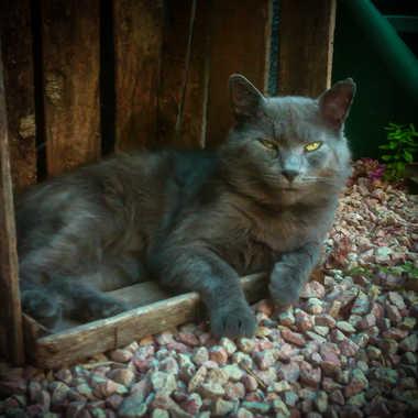 Mon chat par kristy_sax