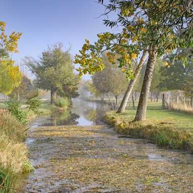 Souvenir d'automne par PSEG