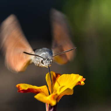 Battement d'ailes par Dav.sv