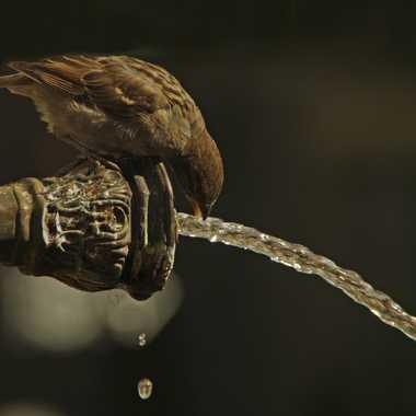 Ois-eau par Myrtille