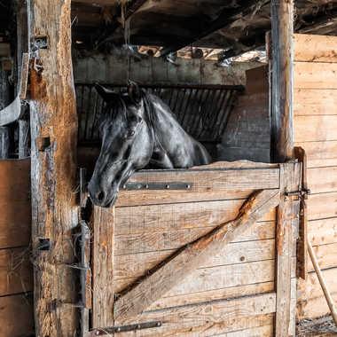 Etalon noir par jctphoto