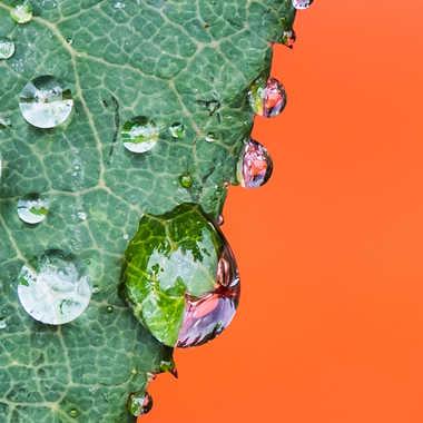 Perles de pluie par Philipounien