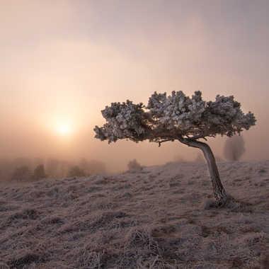 Morning frost  par L_i_o_n_e_L