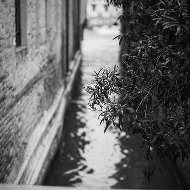 Venise argentique-017 par olso