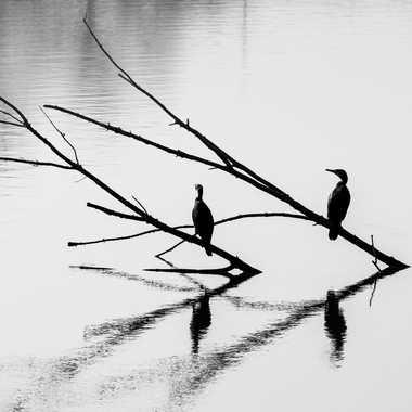 3 branches pour 3 cormorans  par Dav.sv