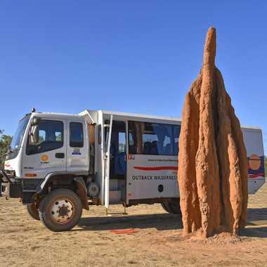 Nid de termites par rmgelpi