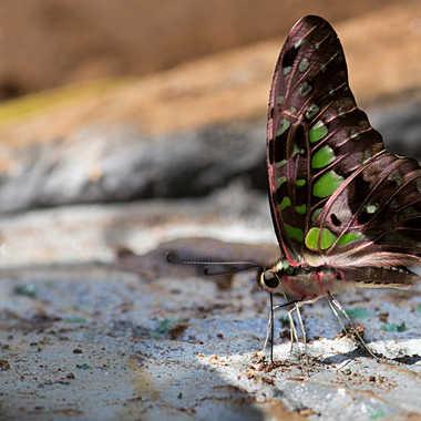 Repas du papillon par patrick69220