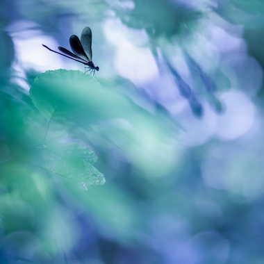 Dressed in black wings par Emmanuel Graindépice