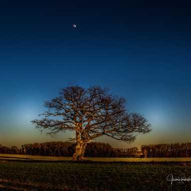 Vieux chêne par Jerome Rabille