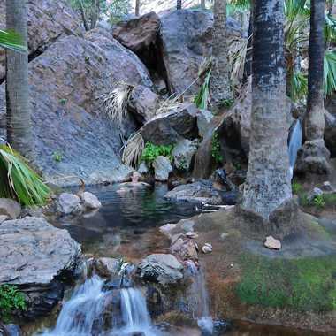 Baignade thermale dans la  jungle  australienne par rmgelpi