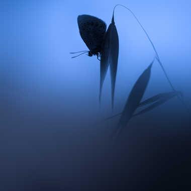 Dream in blue par Guizzo