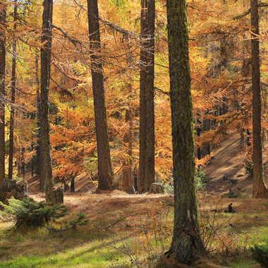 Couleurs d'automne 2 par Farim