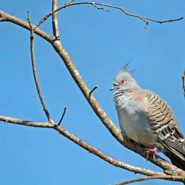 Parc des oiseaux Villars les Dombes par FIDJIE