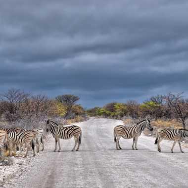 Zebras sur la chaussée par jpdvg