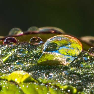Je vous offre ces perles de pluie... par Philipounien