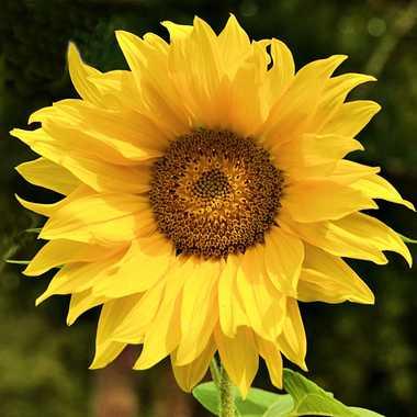 Une fleur pour les martyrs du terrorisme par mamichat