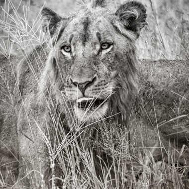 Portrait d'Afrique par patrick69220