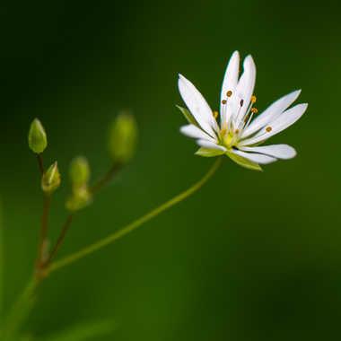 Diagonale florale par Philipounien