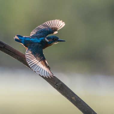 La flêche bleue en action par jeromebouet