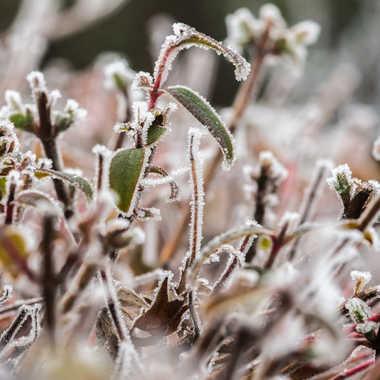 l'hiver est bien là !!! par bubu91
