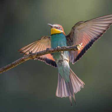 L'oiseau au sept couleurs par jeromebouet