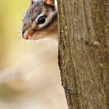 Toc toc, y'a quelqu'un ?? par Nikon78