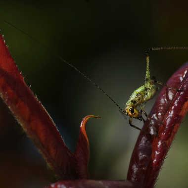 Sorti de l'ombre.. par Nikon78
