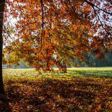 L'automne dans le parc des Célestins par LABADIE