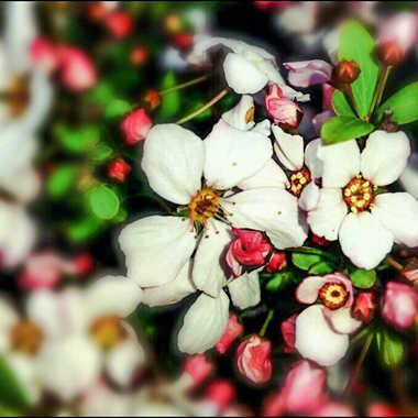 petites fleurs par brj01