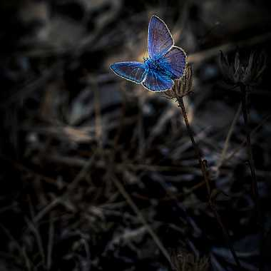Transparence Bleutée ... par FredoRoiDuVelo