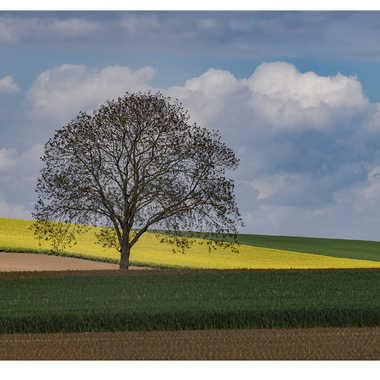 Alsace par Satourne