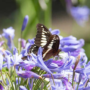 Bain de fleurs pour le papillon par patrick69220