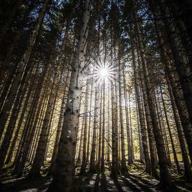 La forêt des ombres par popy