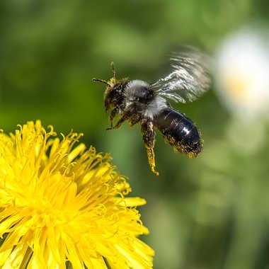 Un peu lourd avec ce pollen... par Philipounien