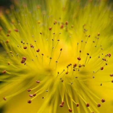 Explozoom Naturel par Isabellefalconnet
