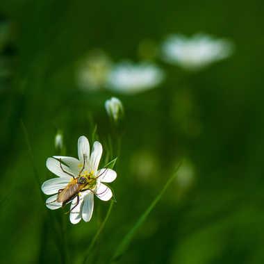 Ma fleur... par Philipounien