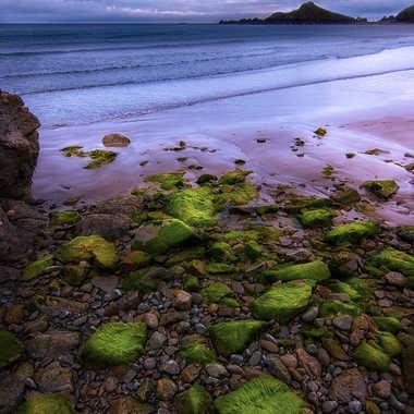 algues vertes par Jeremy_7517