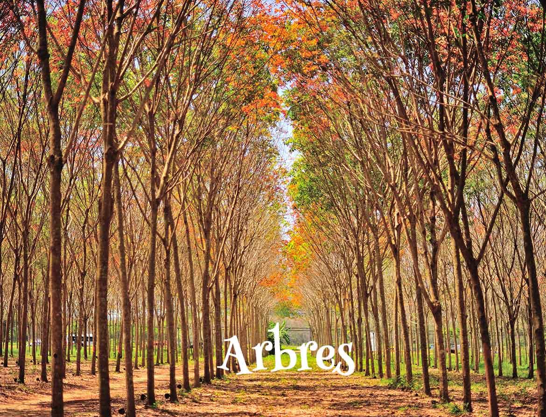 Concours Photo - Arbre(s)