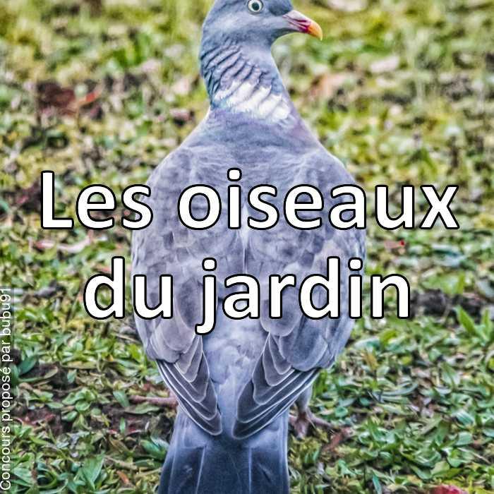 Concours Photo - Les oiseaux du jardin