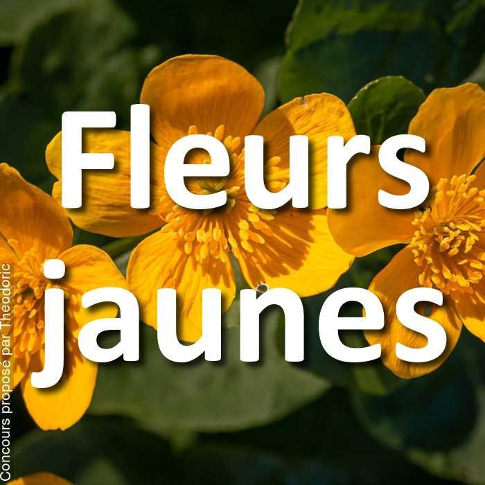 Concours Photo - Fleurs jaunes