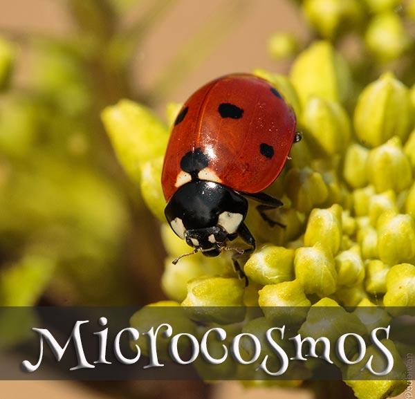 Concours Photo - Microcosmos #2
