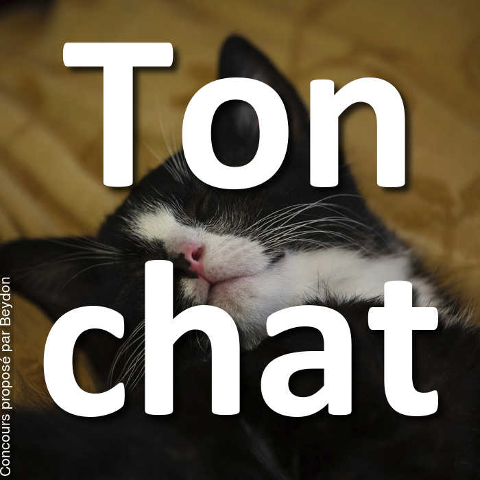 Concours Photo - Ton chat