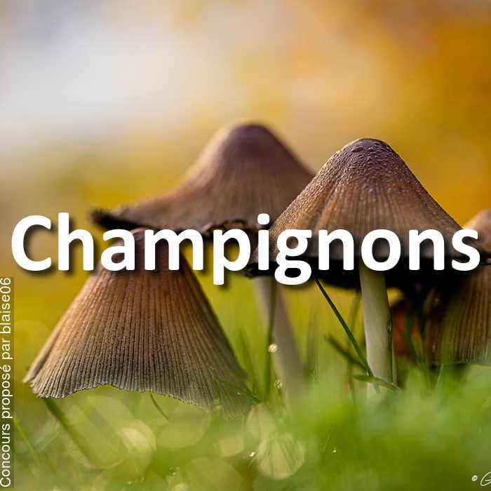 Concours Photo - Champignons