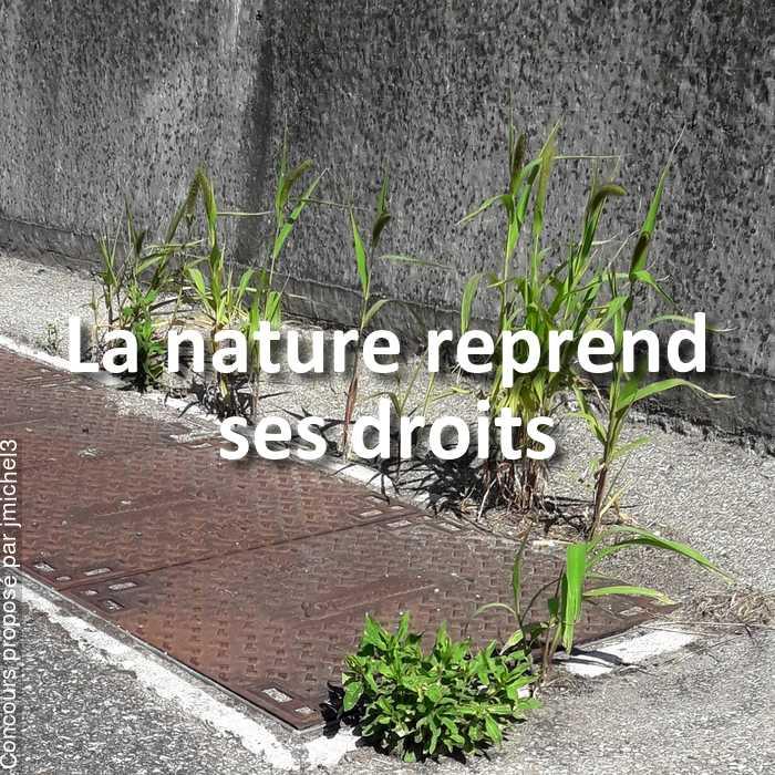 Concours Photo - La nature reprend ses droits