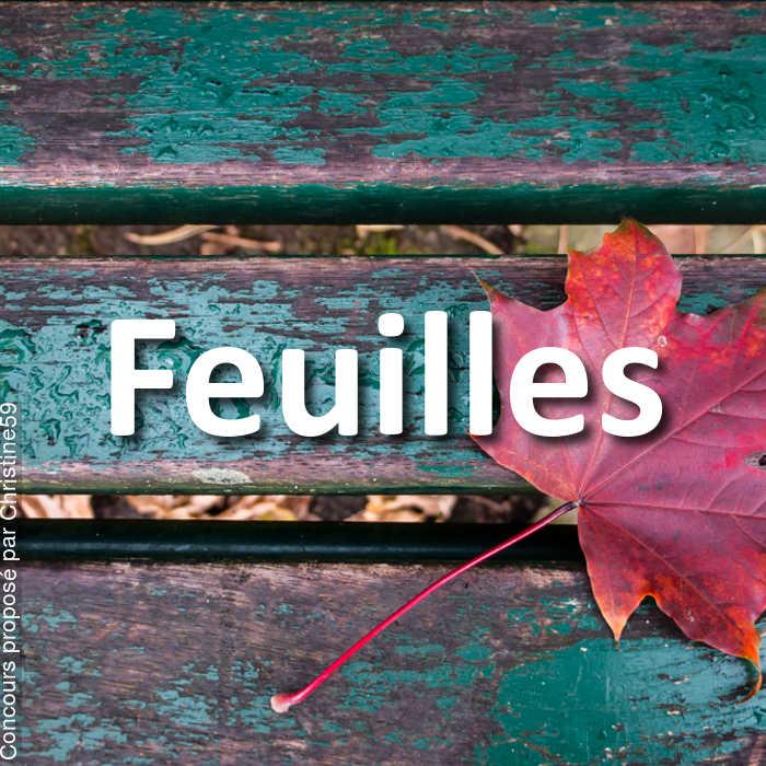 Concours Photo - Feuilles