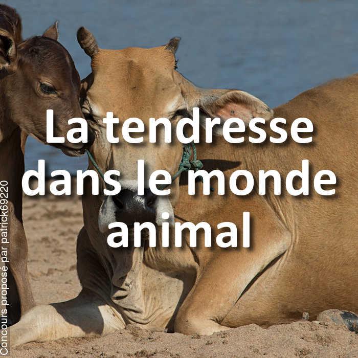 Concours Photo - La tendresse dans le monde animal