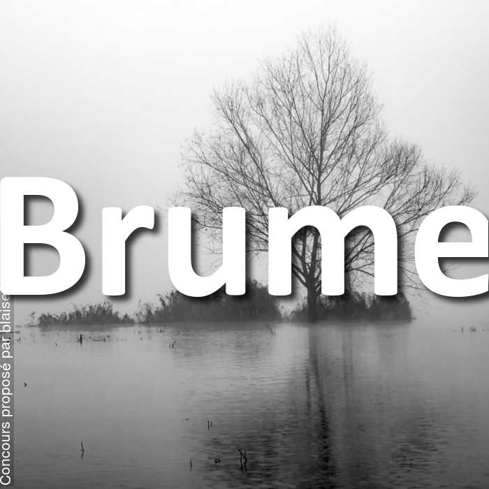Concours Photo - Brume