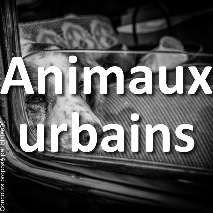 Concours Photo - Animaux urbains