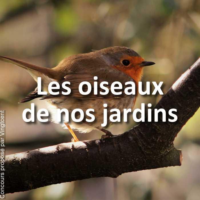 Concours Photo - Les oiseaux de nos jardins